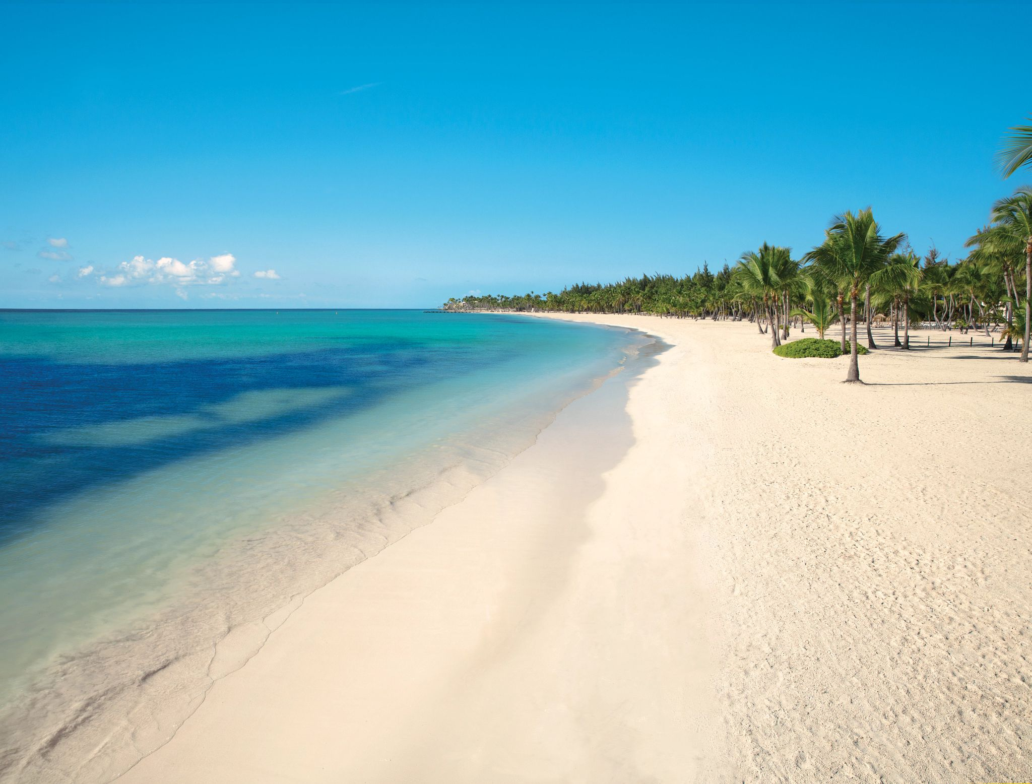 white sand beach and palm trees