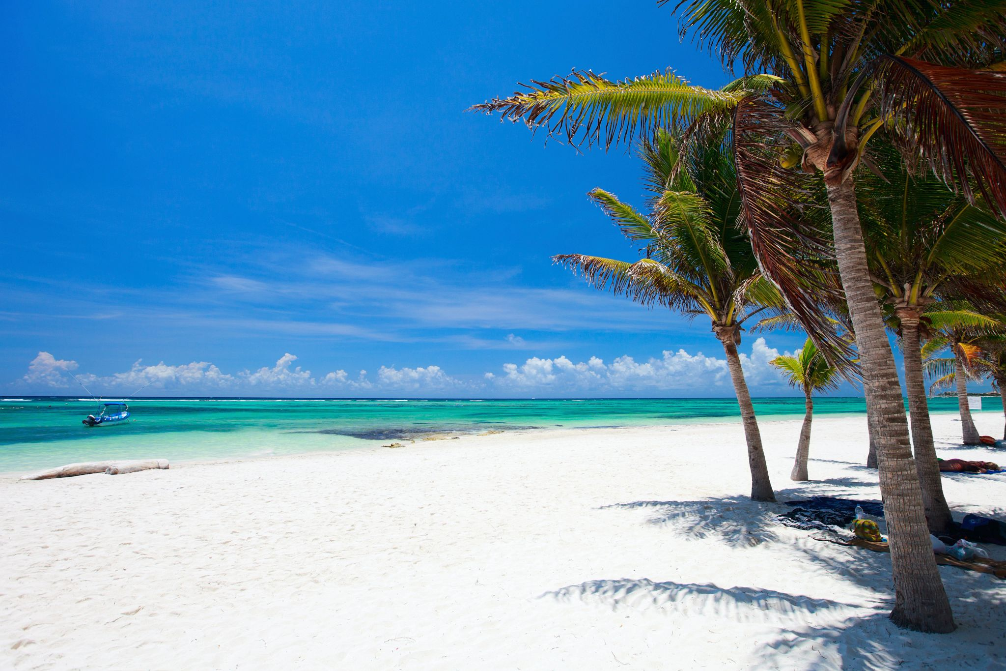 white sandy beach with palm tree and a clear blue sea
